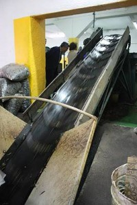 b2ap3_thumbnail_Olives-conveyor-belt-4